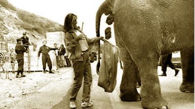 Kotoran Gajah Indonesia Jadi Kertas Oleh Australia